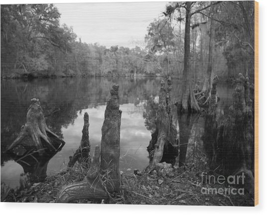 Swamp Stump II Wood Print