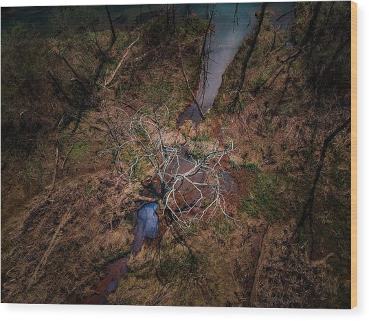 Swamp Tree Wood Print