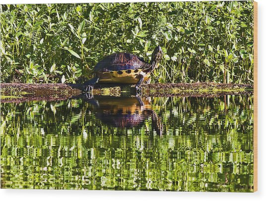 Swamp Turtle Sunning On A Log Wood Print by Michael Whitaker