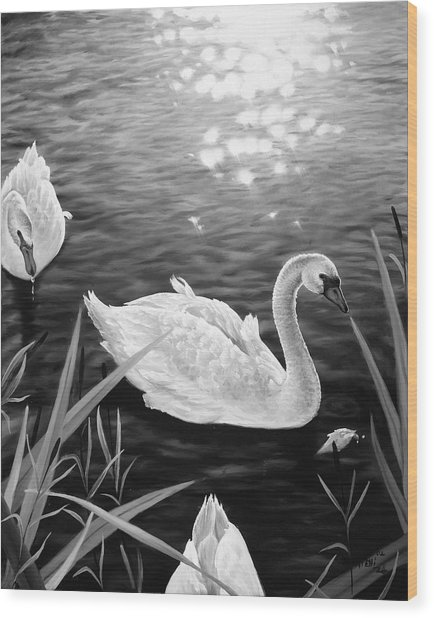 Swan 3 Wood Print