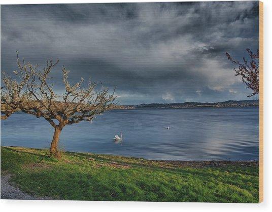 Swan And Tree Wood Print