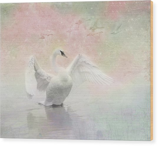 Swan Dream - Display Spring Pastel Colors Wood Print