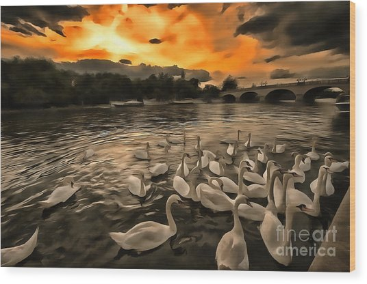 Swan Gloaming Kingston U K Wood Print