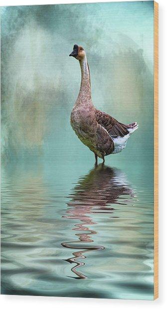 Swan Goose Wood Print