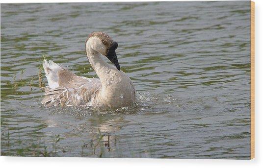 Swan Goose Splish Splash Series - 2 Wood Print