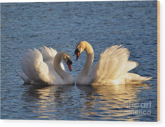 Swan Heart Wood Print