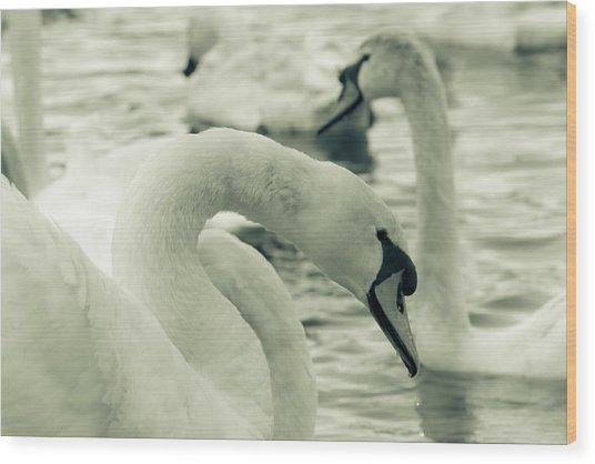 Swan In Water Wood Print