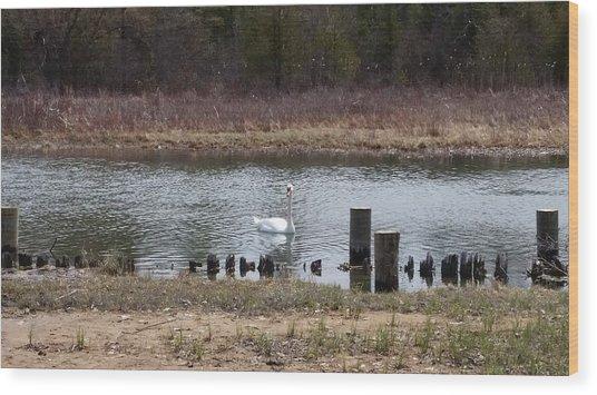 Swan Of Crooked River Wood Print