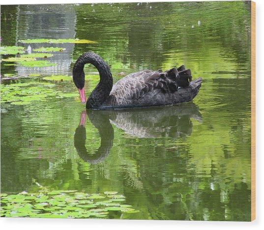 Swan Of Hearts Wood Print