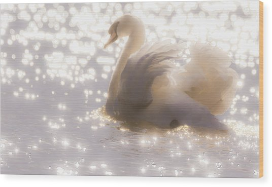 Swan Of The Glittery Early Evening Wood Print