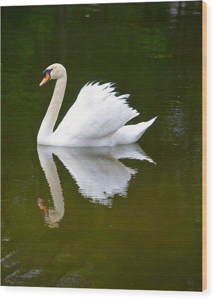 Swan Reflecting Wood Print