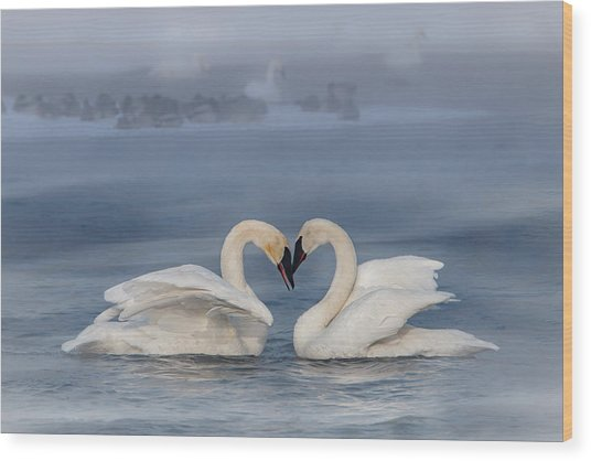 Wood Print featuring the photograph Swan Valentine - Blue by Patti Deters