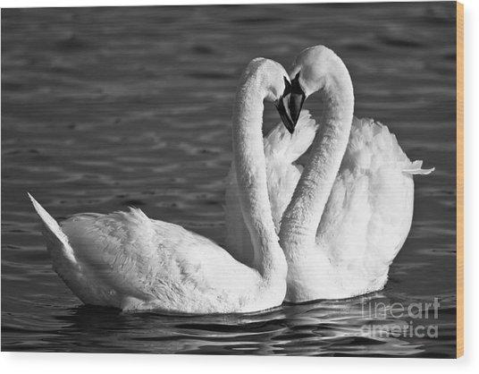Swans Wood Print by Brandon Broderick
