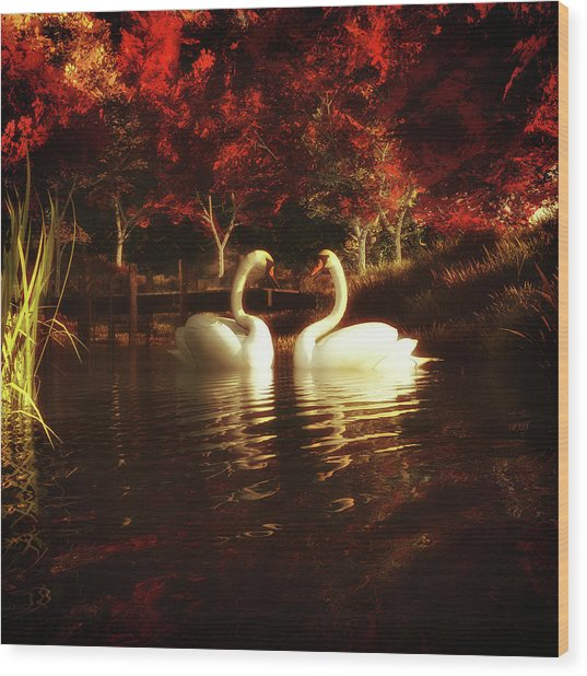 Swans In A Pond Wood Print