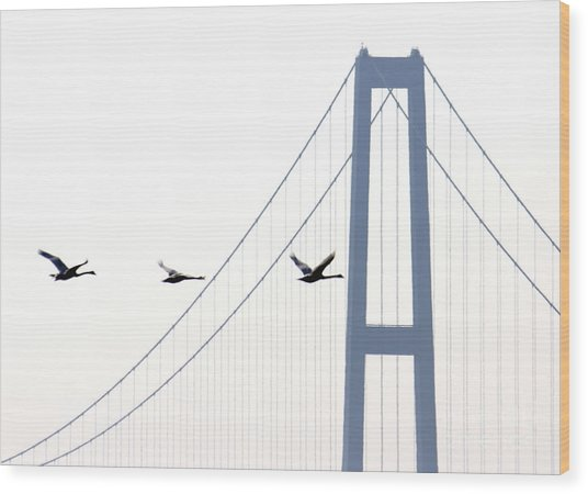 Swans In Line Wood Print by Toon De Zwart