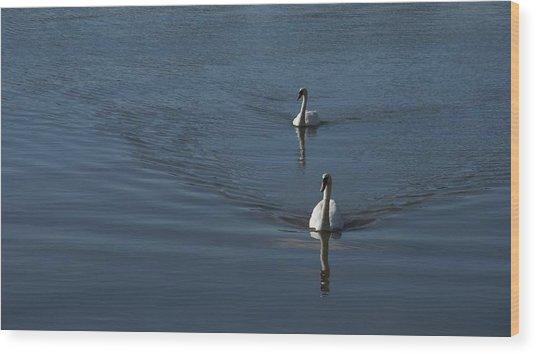 Swans On Blue Wood Print