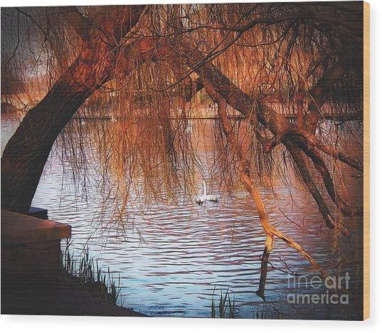 Swans On The Avon Wood Print