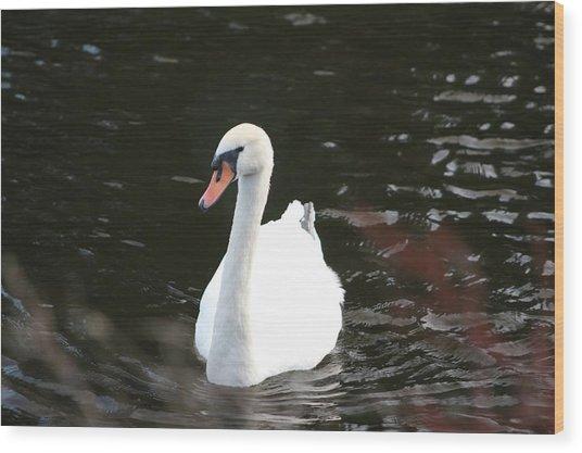 Swans-a-swimming Wood Print