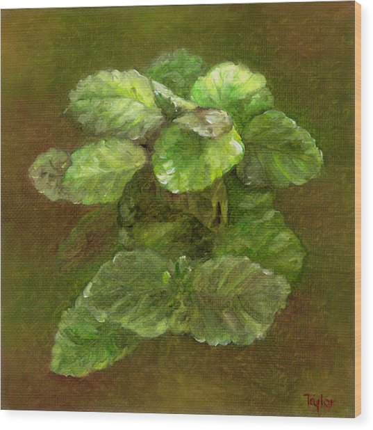 Swedish Ivy Wood Print