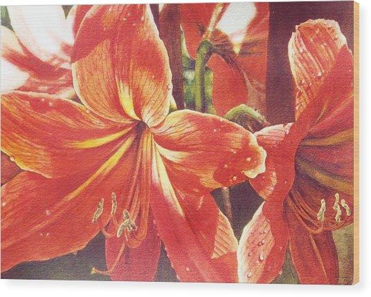 Sweet Amaryllis Wood Print by Marion  Hylton