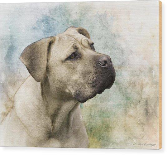 Sweet Cane Corso, Italian Mastiff Dog Portrait Wood Print