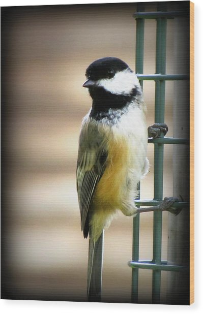 Sweet Little Chickadee Wood Print by Lisa Jayne Konopka