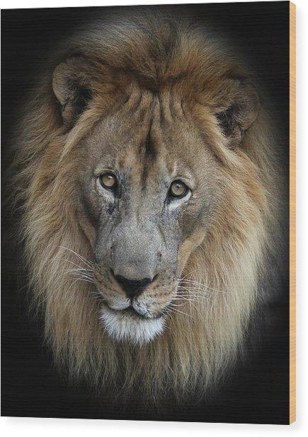 Sweet Male Lion Wood Print