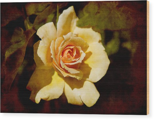 Sweet Rose Wood Print