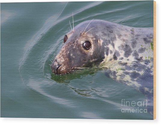 Sweet Seal Wood Print