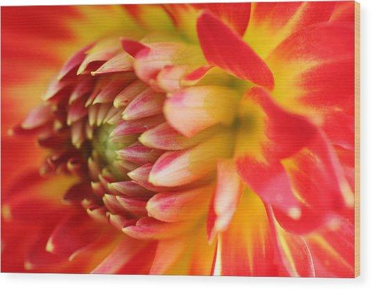 Sweet Spring Wood Print