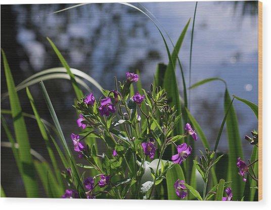 Sweet Violet Wood Print