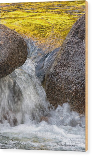 Swift Gold 6333 Wood Print