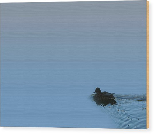 Swimming Duck Wood Print