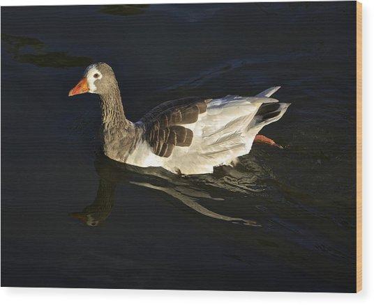 Swimming Goose Wood Print