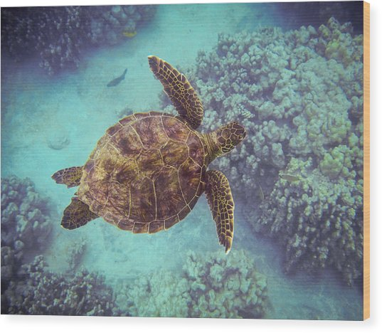 Swimming Honu From Above Wood Print