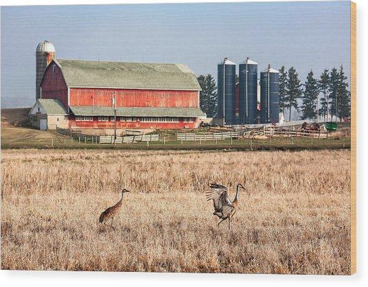 Swiss Cranes Wood Print