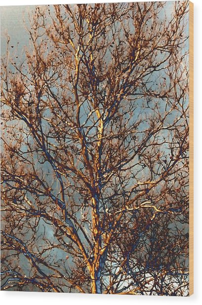 Sycamore Against November Sky Wood Print by Beth Akerman