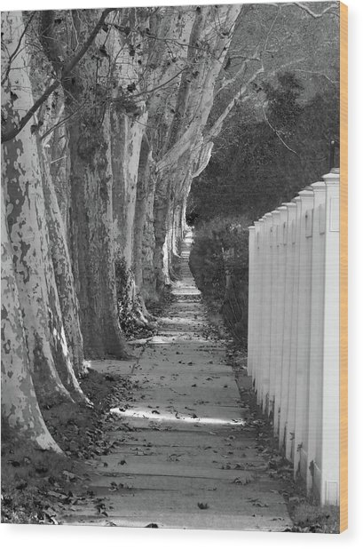 Sycamore Walk-grayscale Version Wood Print