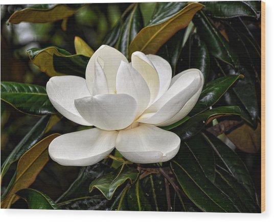 Symbol Of A Southern Summer Wood Print