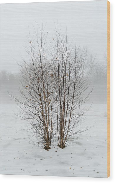 Symmetrees Wood Print