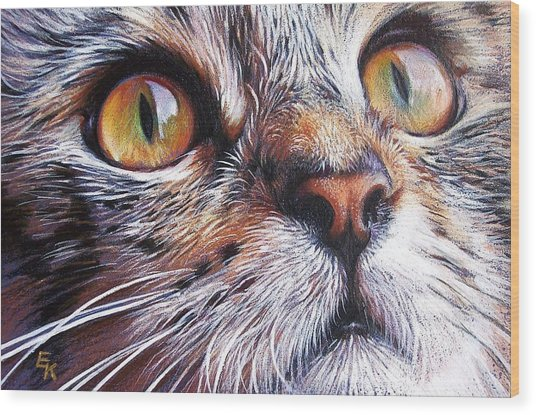 Tabby Look 2 Wood Print