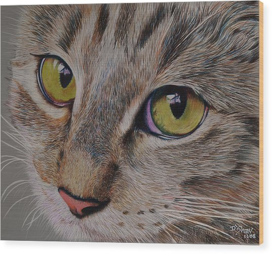 Tabby Stare Wood Print by Don MacCarthy