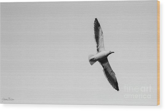 Take Flight, Black And White Wood Print