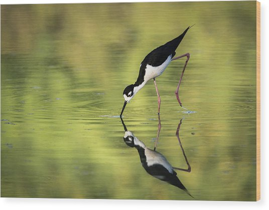 Taking A Dip Wood Print by Emily Bristor