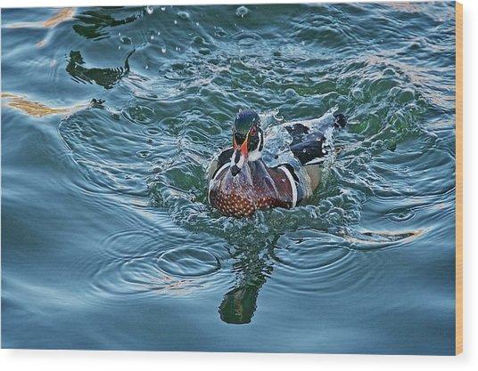 Taking A Dip, Wood Duck Wood Print