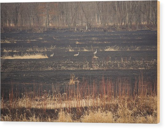 Wood Print featuring the photograph Taking A Walk by Viviana  Nadowski