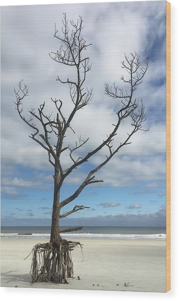 Talbot Stilt Tree #1 Wood Print