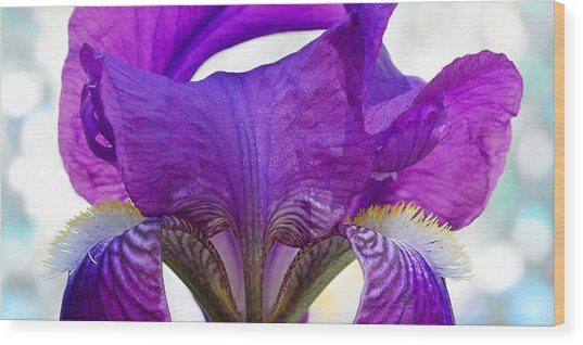Tall, Bearded And Handsome - Iris Wood Print