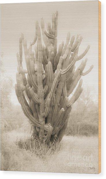 Tall Cactus In Sepia Wood Print