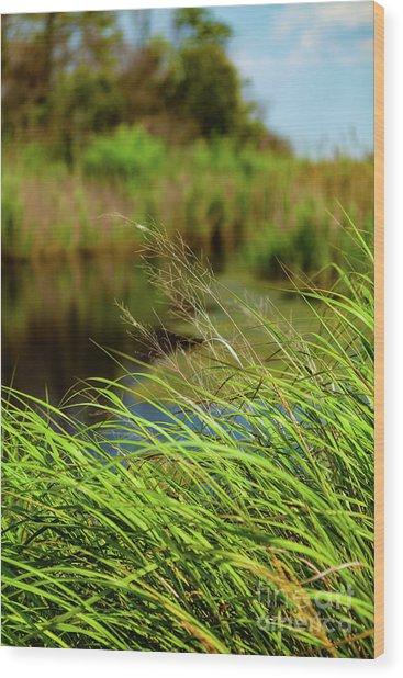 Tall Grass At Boat Dock Wood Print